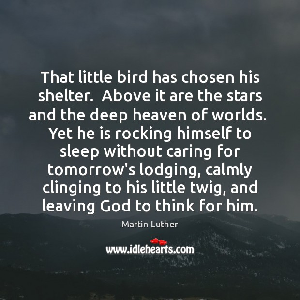 That little bird has chosen his shelter.  Above it are the stars Image