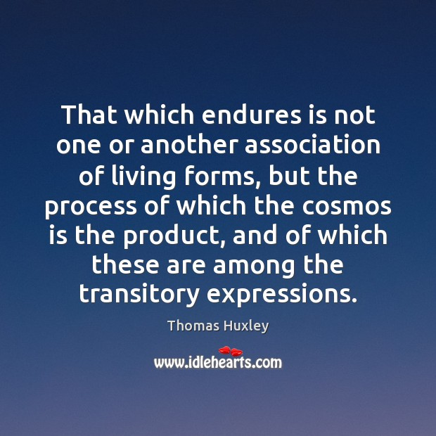 That which endures is not one or another association of living forms, Image