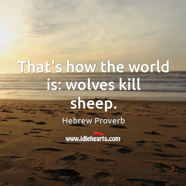 Image, That's how the world is: wolves kill sheep.