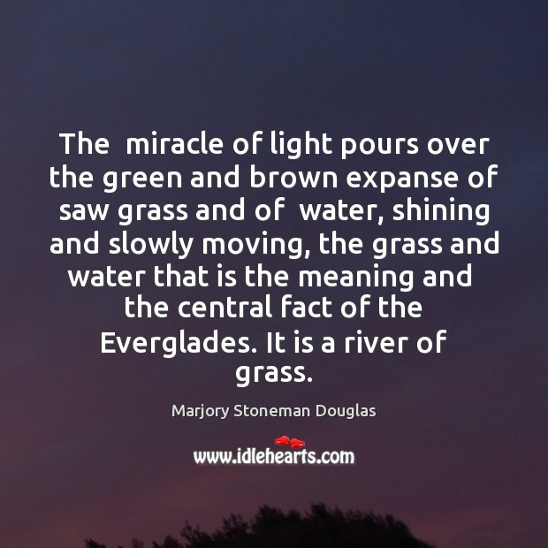The  miracle of light pours over the green and brown expanse of Image