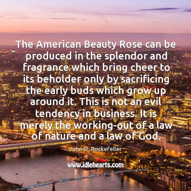 Image, The American Beauty Rose can be produced in the splendor and fragrance