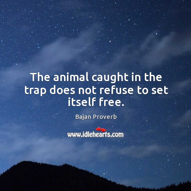 Image, The animal caught in the trap does not refuse to set itself free.