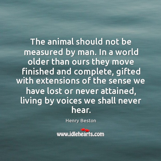 The animal should not be measured by man. In a world older Henry Beston Picture Quote