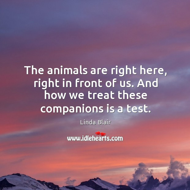 The animals are right here, right in front of us. And how we treat these companions is a test. Image