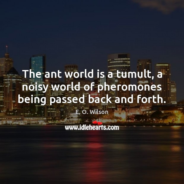The ant world is a tumult, a noisy world of pheromones being passed back and forth. Image