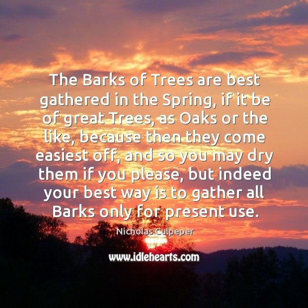 The barks of trees are best gathered in the spring, if it be of great trees Image