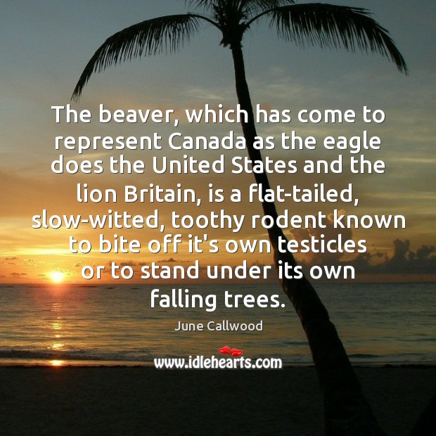 Image, The beaver, which has come to represent Canada as the eagle does