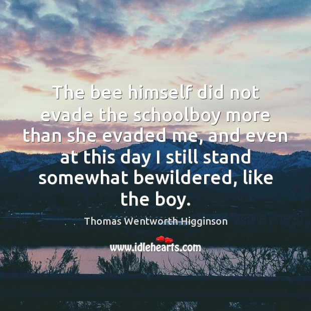 The bee himself did not evade the schoolboy more than she evaded Thomas Wentworth Higginson Picture Quote