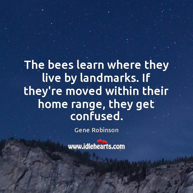 The bees learn where they live by landmarks. If they're moved within Gene Robinson Picture Quote
