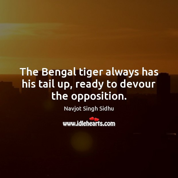 The Bengal tiger always has his tail up, ready to devour the opposition. Image