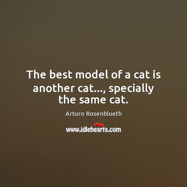 Image, The best model of a cat is another cat…, specially the same cat.