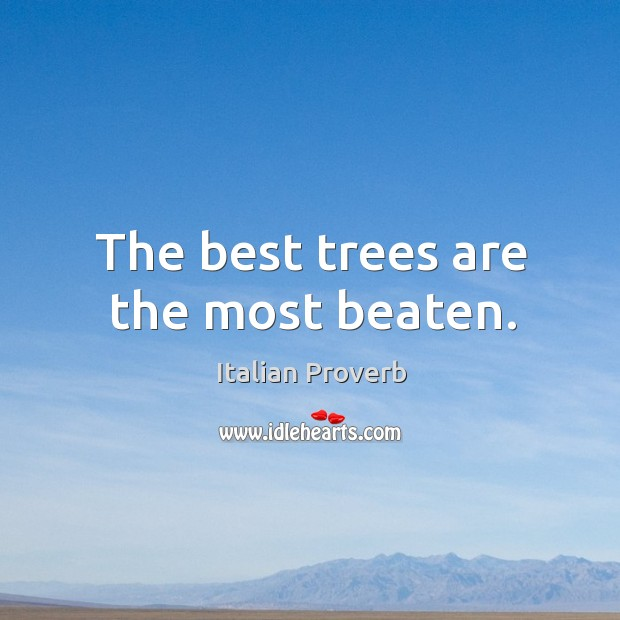 Image, The best trees are the most beaten.