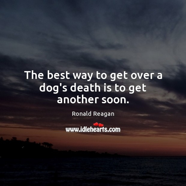 Image, The best way to get over a dog's death is to get another soon.