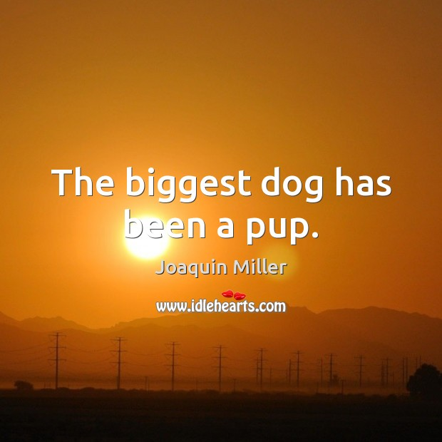 The biggest dog has been a pup. Image