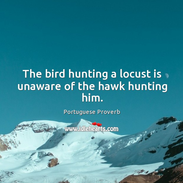 The bird hunting a locust is unaware of the hawk hunting him. Image