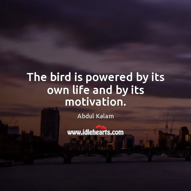 Image, The bird is powered by its own life and by its motivation.