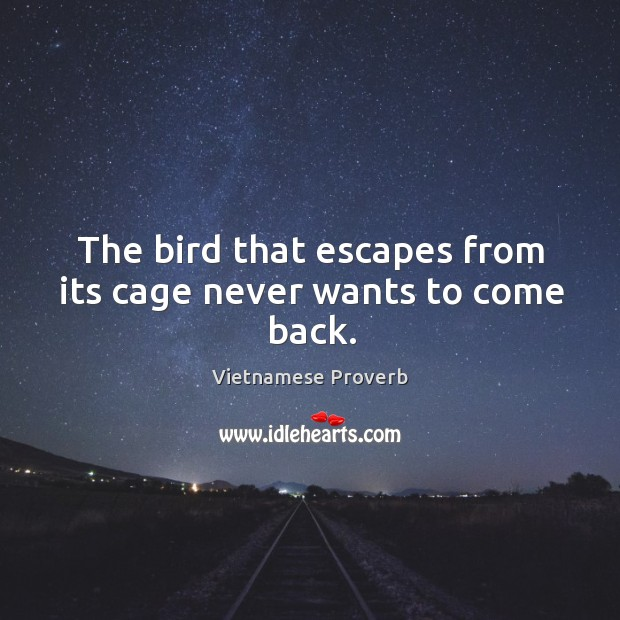 The bird that escapes from its cage never wants to come back. Vietnamese Proverbs Image