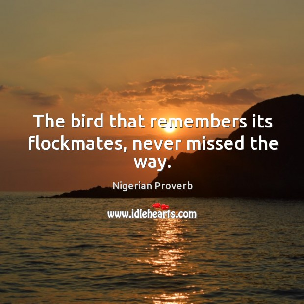 Image, The bird that remembers its flockmates, never missed the way.