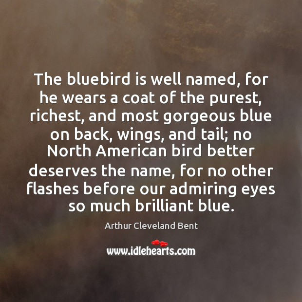 Image, The bluebird is well named, for he wears a coat of the