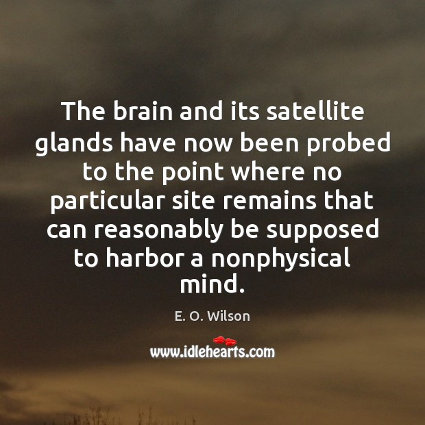 The brain and its satellite glands have now been probed to the E. O. Wilson Picture Quote