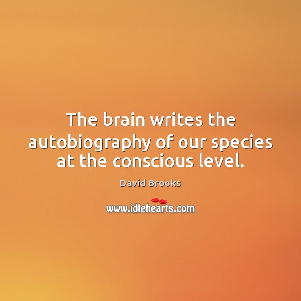 The brain writes the autobiography of our species at the conscious level. Image