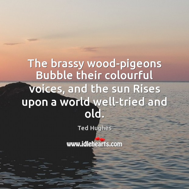 The brassy wood-pigeons Bubble their colourful voices, and the sun Rises upon Ted Hughes Picture Quote