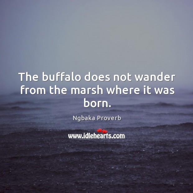 Ngbaka Proverbs