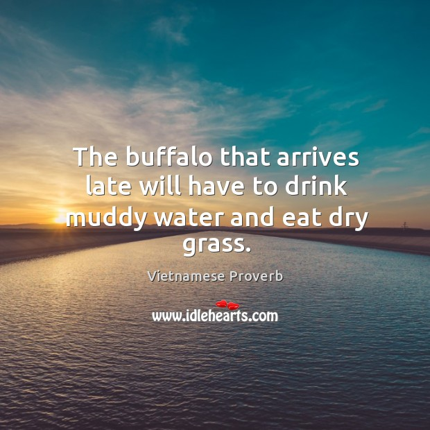 The buffalo that arrives late will have to drink muddy water and eat dry grass. Vietnamese Proverbs Image
