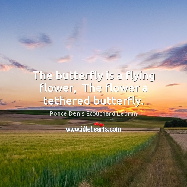 The butterfly is a flying flower,  The flower a tethered butterfly. Image