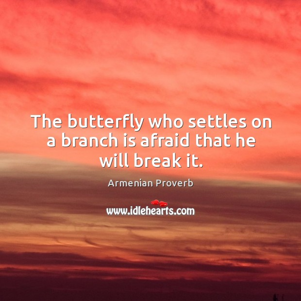 The butterfly who settles on a branch is afraid that he will break it. Armenian Proverbs Image