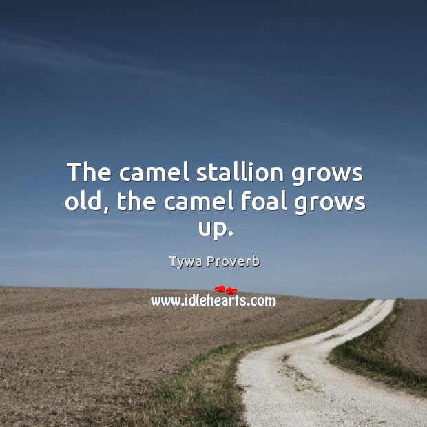 The camel stallion grows old, the camel foal grows up. Tywa Proverbs Image