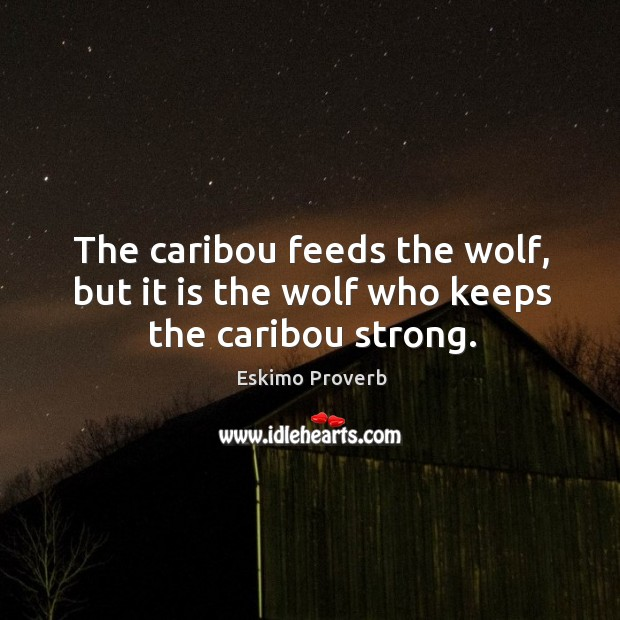 The caribou feeds the wolf, but it is the wolf who keeps the caribou strong. Eskimo Proverbs Image