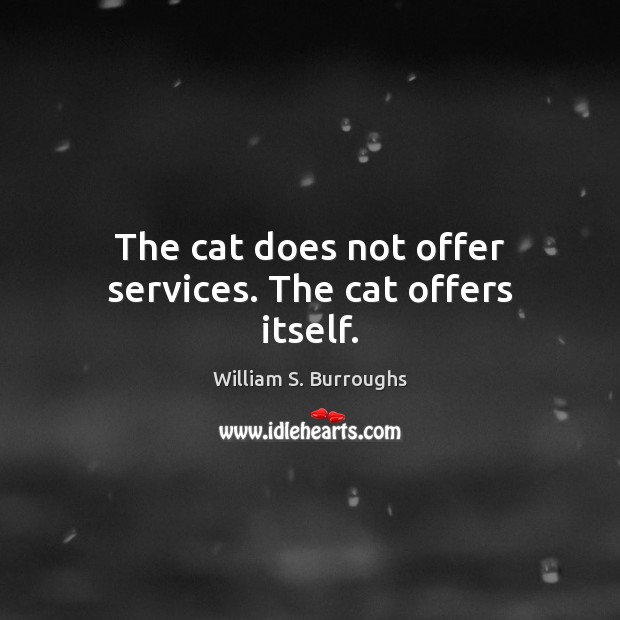 The cat does not offer services. The cat offers itself. Image