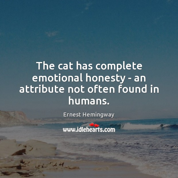The cat has complete emotional honesty – an attribute not often found in humans. Image