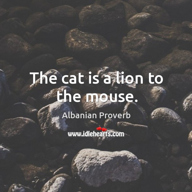 The cat is a lion to the mouse. Albanian Proverbs Image