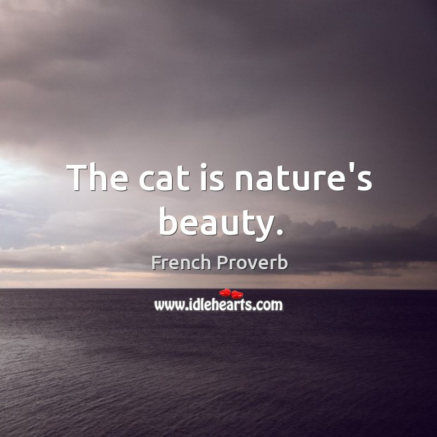 The cat is nature's beauty. Image