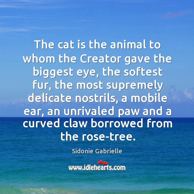 The cat is the animal to whom the creator gave the biggest eye Image