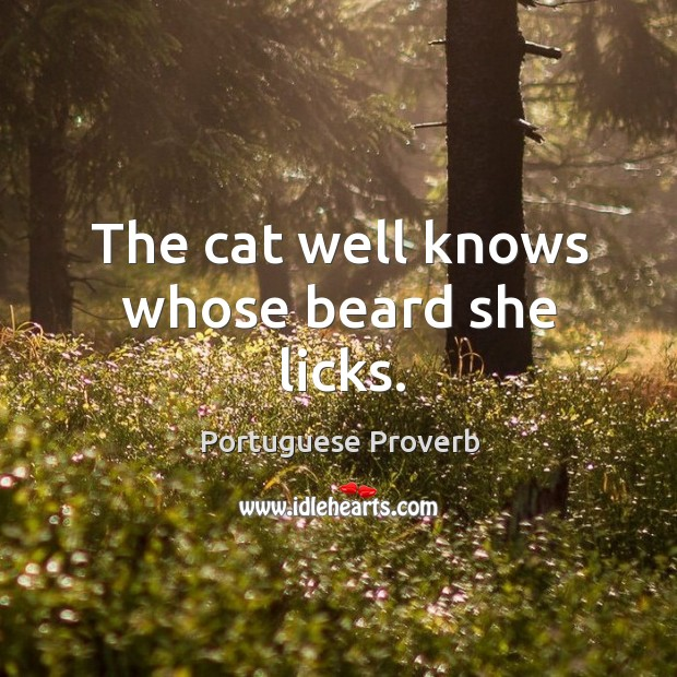 The cat well knows whose beard she licks. Image