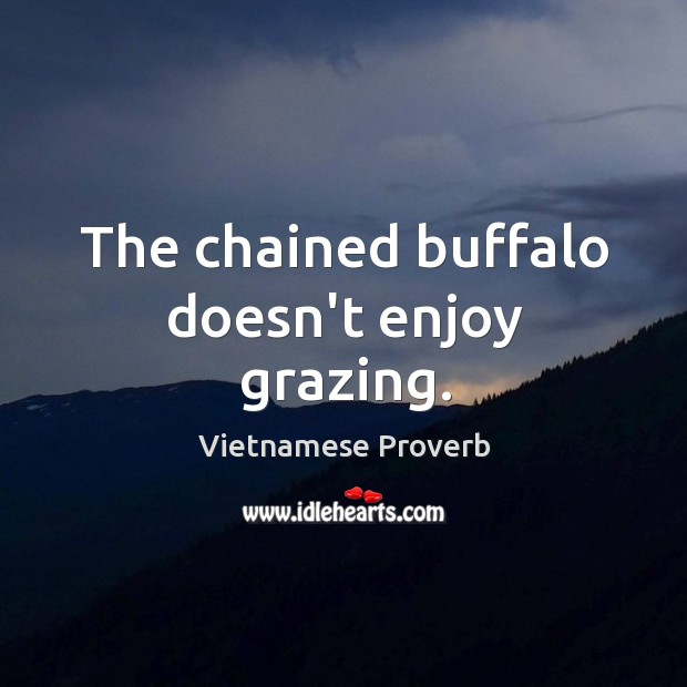 The chained buffalo doesn't enjoy grazing. Vietnamese Proverbs Image