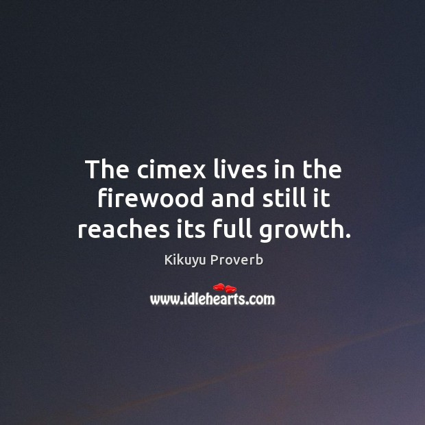 The cimex lives in the firewood and still it reaches its full growth. Kikuyu Proverbs Image