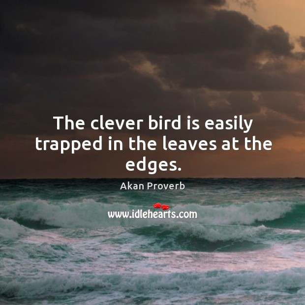 The clever bird is easily trapped in the leaves at the edges. Akan Proverbs Image