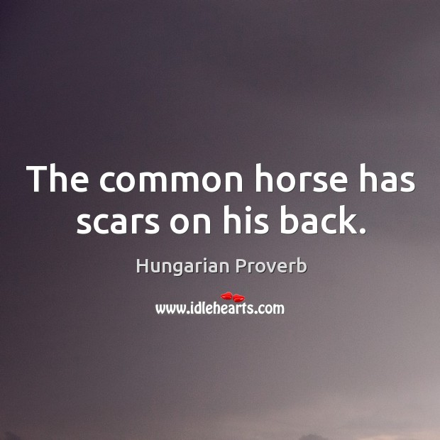 The common horse has scars on his back. Image