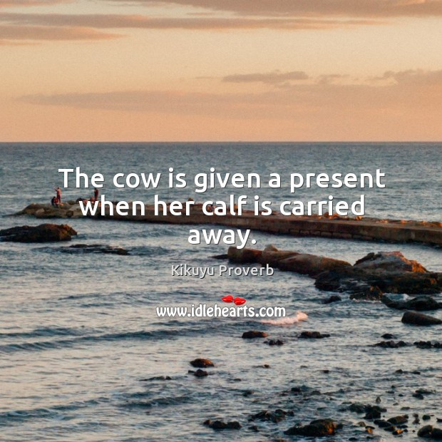 The cow is given a present when her calf is carried away. Kikuyu Proverbs Image