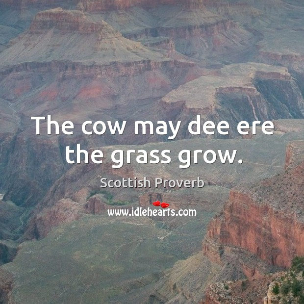 Image, The cow may dee ere the grass grow.