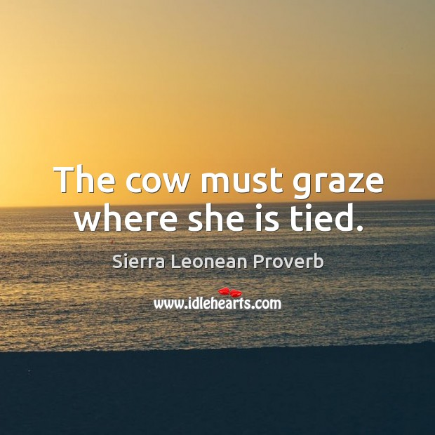 The cow must graze where she is tied. Sierra Leonean Proverbs Image