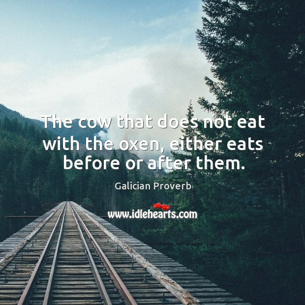 Image, The cow that does not eat with the oxen, either eats before or after them.