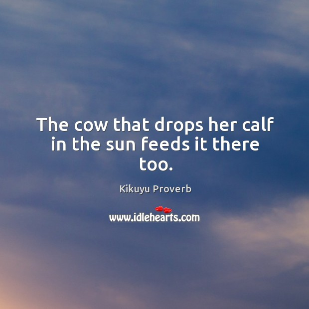 The cow that drops her calf in the sun feeds it there too. Kikuyu Proverbs Image