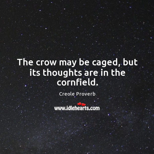 The crow may be caged, but its thoughts are in the cornfield. Creole Proverbs Image