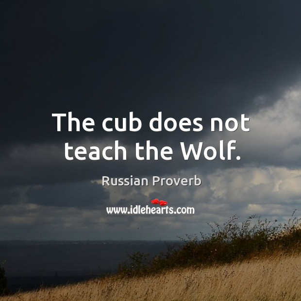 Image, The cub does not teach the wolf.