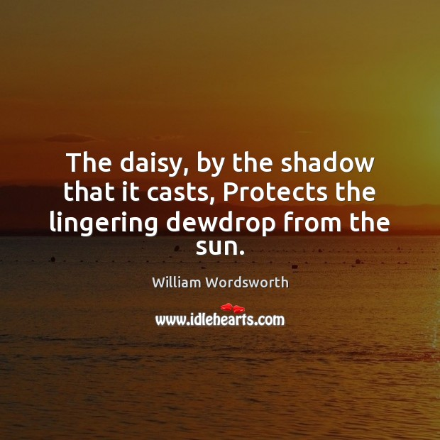 The daisy, by the shadow that it casts, Protects the lingering dewdrop from the sun. William Wordsworth Picture Quote